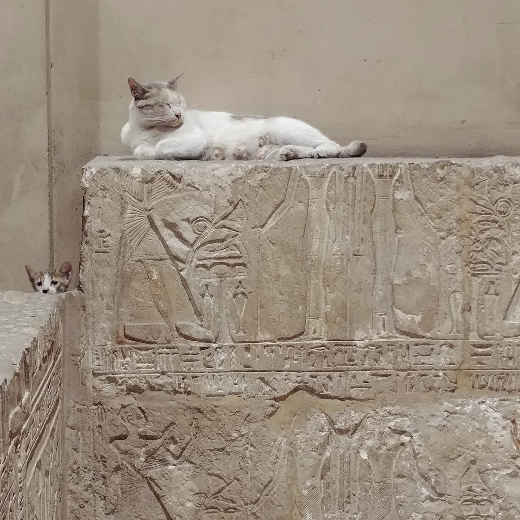 cats inside cairo egyptian museum