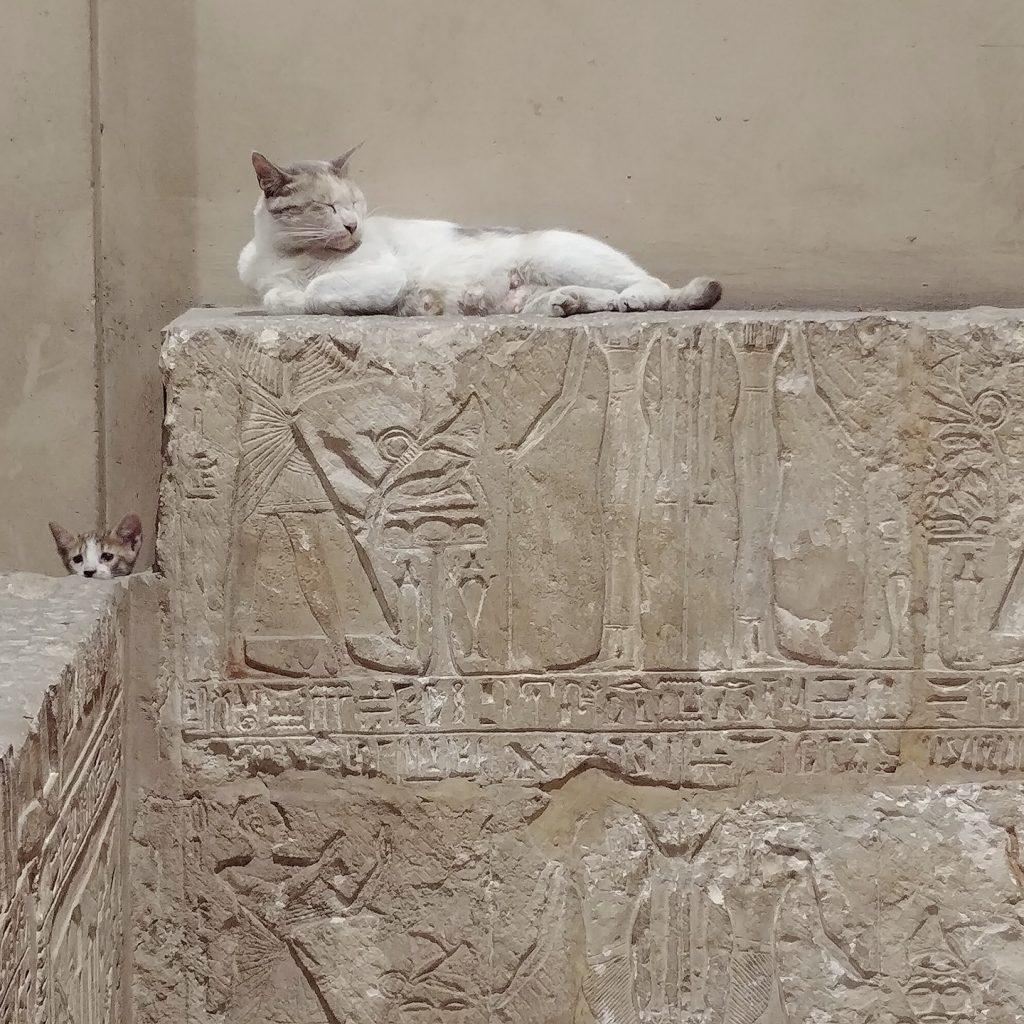 cats inside cairo egyptian museum