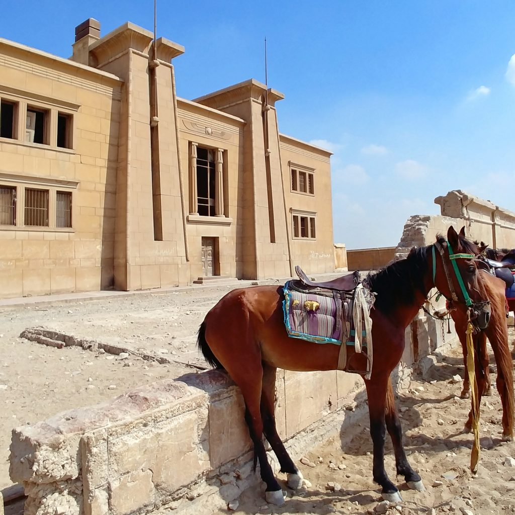 horse at the entrance of Pyramids museum cairo