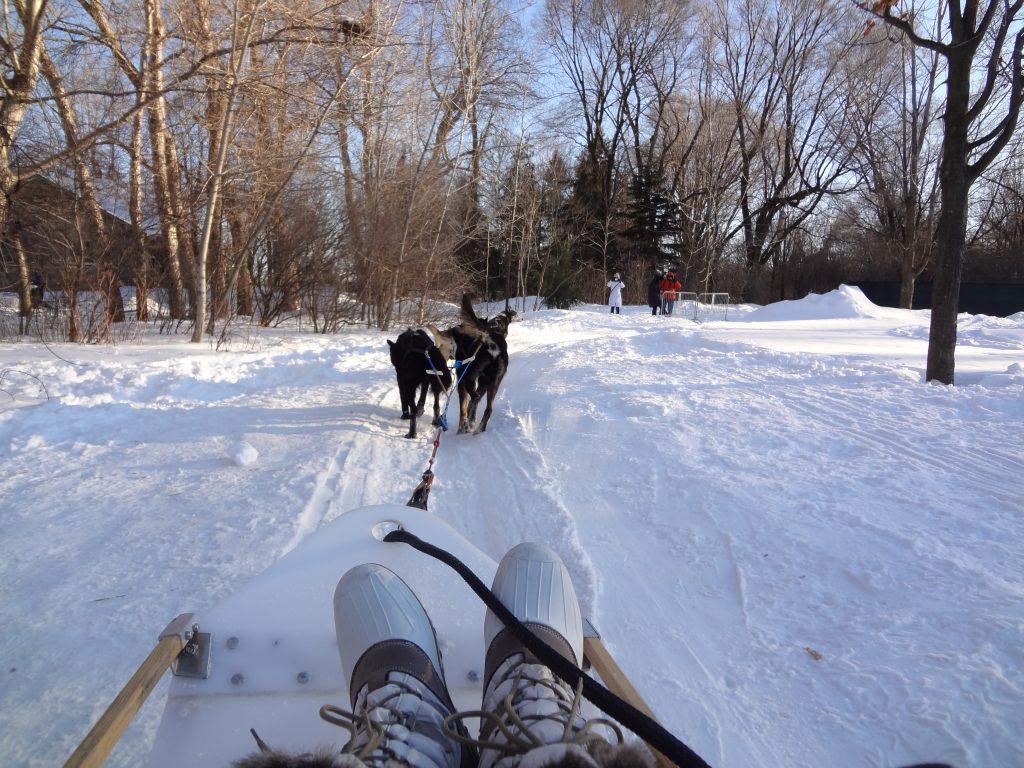dog sledding into Canadian forest