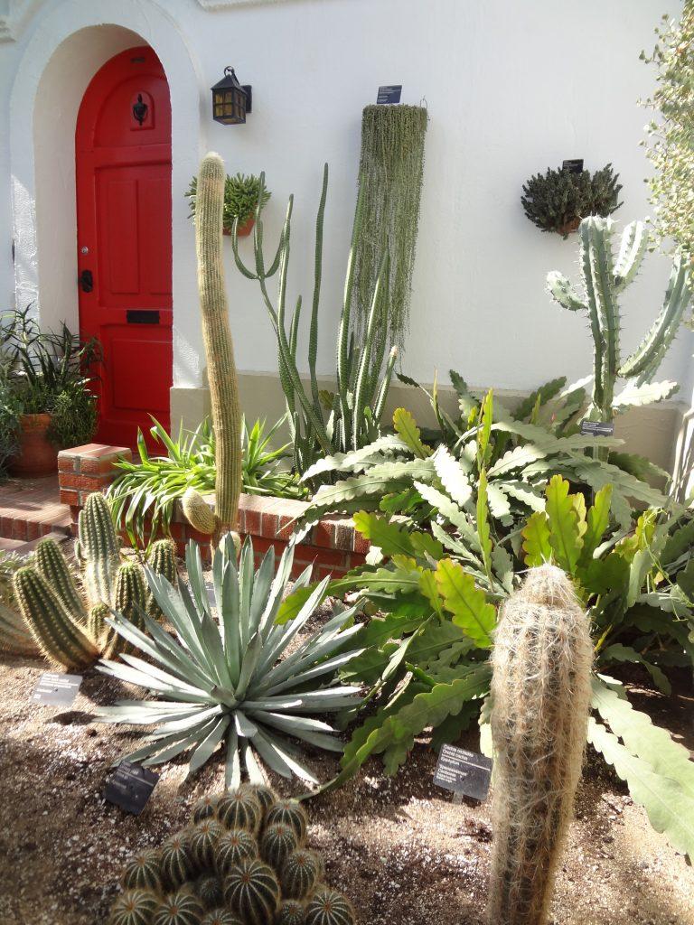 cactus garden with a red door in the background
