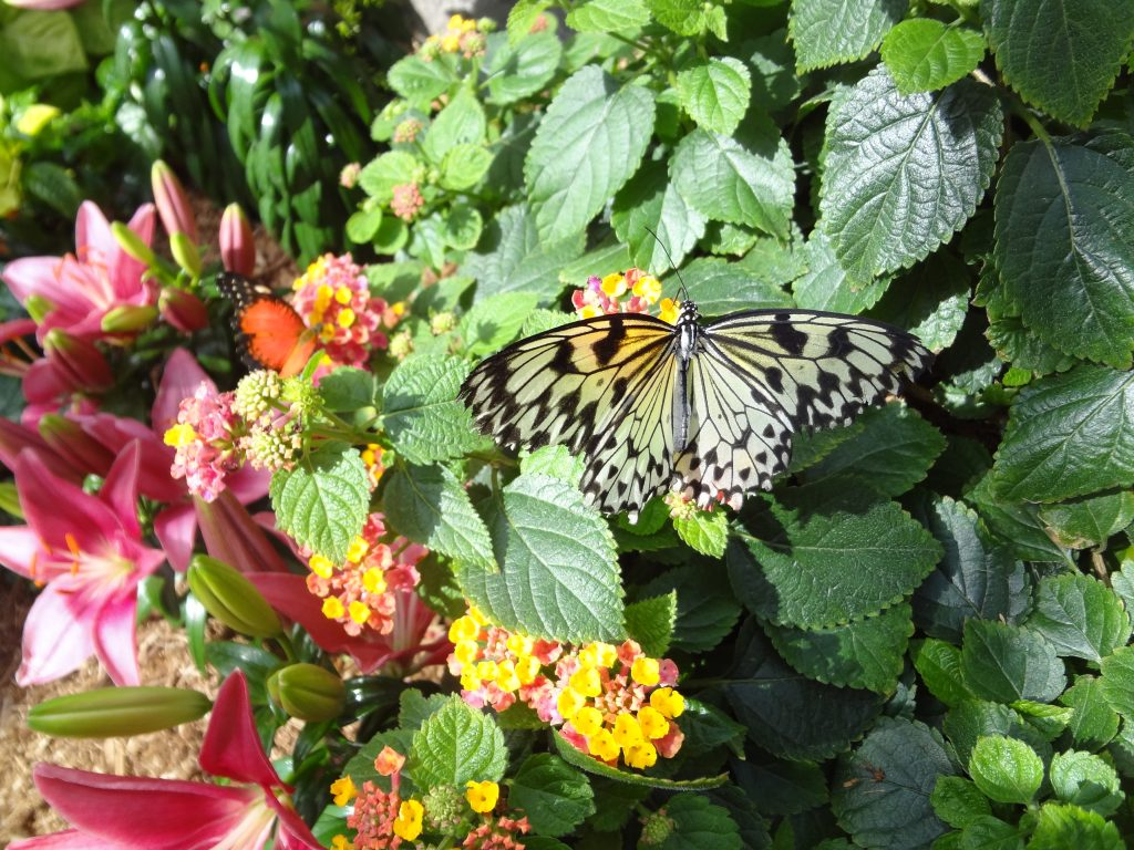 a butterfly is standing on flowers