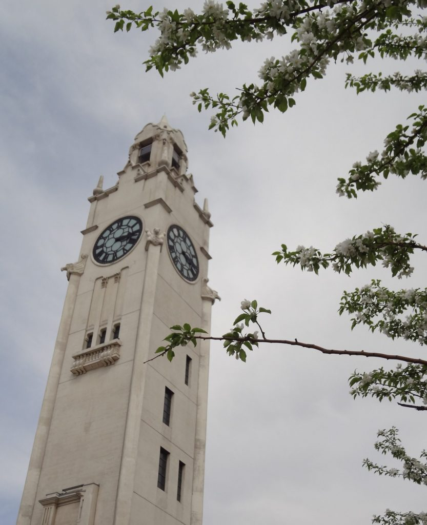 flower blossom in front of Clock Tower