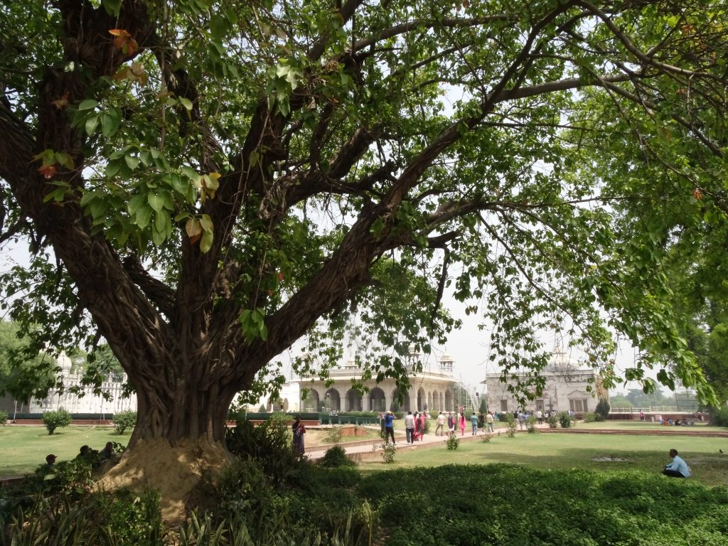 massive trees and gardens inside the Red Fort in Delhi
