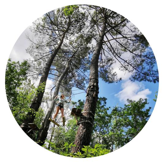 tree climbing activity